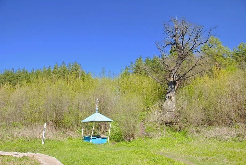 Введенская Макариевская пустынь, Жабынь, урочище