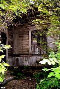 Церковь Димитрия Солунского - Катериновка - Велико-Бурлукский район - Украина, Харьковская область