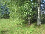 Кирилло-Челмогорская пустынь - Чёлма, урочище - Каргопольский район - Архангельская область