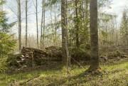 Церковь Троицы Живоначальной - Курженское озеро - Вытегорский район - Вологодская область