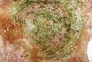 Церковь Воскресения Христова - Воскресенское (Дубровка) - Ферзиковский район - Калужская область