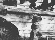 Часовня Макария Унженского и Желтоводского и Харалампия - Авдотьино - Плесецкий район - Архангельская область
