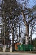 Успенский Пюхтицкий женский монастырь. Часовня Успения Пресвятой Богородицы у дуба - Куремяэ - Ида-Вирумаа - Эстония