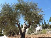 Подворье Русской Духовной Миссии с храмом в честь Святых Праотцев - Хеврон - Палестина - Прочие страны