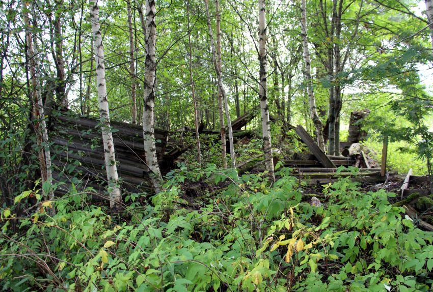 Вологодская область, Вытегорский район, Карданга. Часовня Георгия Победоносца, фотография. общий вид в ландшафте
