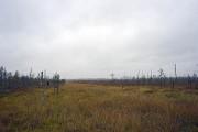 Рёконьская пустынь. Неизвестный скит - Рёконьская пустынь - Любытинский район - Новгородская область